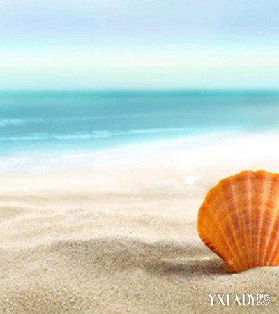 观赏海边的小贝壳图片 小小贝壳魅力无限展风采