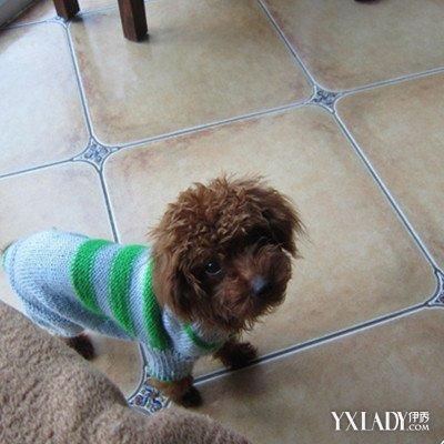 【图】漂亮的狗毛衣编织图解