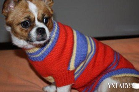 【图】狗狗宠物毛衣编织图解