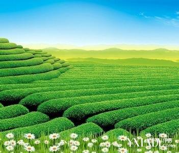 茶树精油 怎么/茶树精油美容方法: