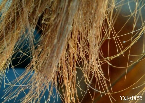 【图】头发分叉是什么原因引起 摆脱分叉变飘