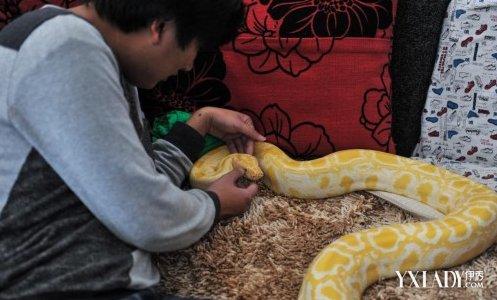 如今他在云南野生动物园工作,因工作需要,一些蛇有时候需要寄住在他得