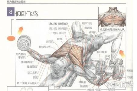 练胸肌最快的方法_