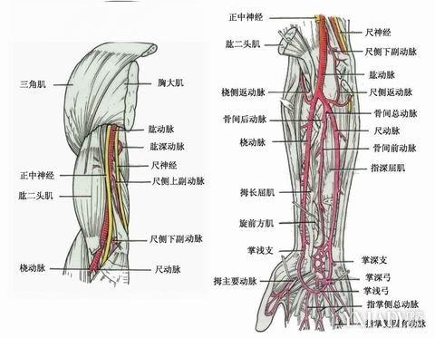 伤科 局部探究解剖图