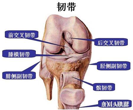 【图】膝盖韧带损伤的原因