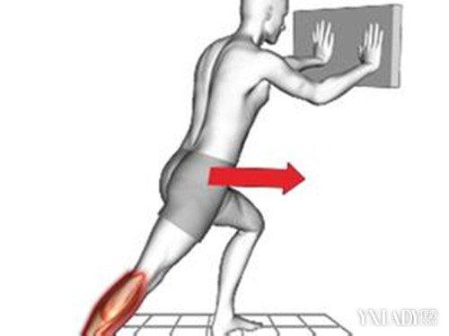 【图】小腿的韧带图的图解