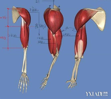 人和高等动物的骨骼在体内,由许多块骨头组成,叫内骨骼;节肢动物,软体