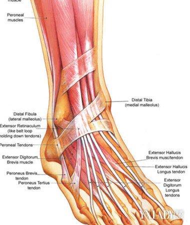 【图】小腿骨头隐痛的原因