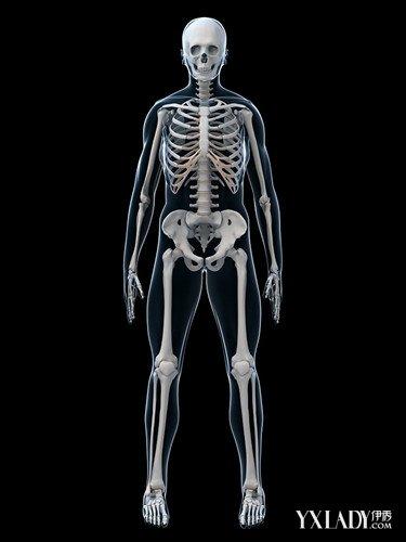 骨骼化是生物结构复杂化的基础,骨骼系统又是生物形态进化的限制因素