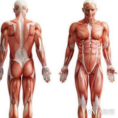 左手掌骨骼结构图