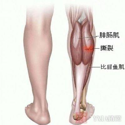 人体腿部经络图 教你学会经络拍打健体