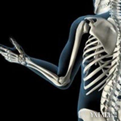 【图】人体手臂骨骼结构图 详细解说向你解剖骨骼系统