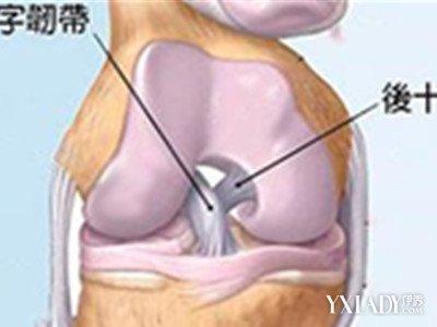【图】十字韧带损伤怎么恢复呢? 小技巧轻松让