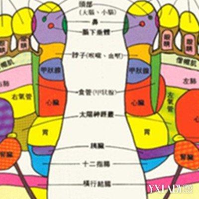 脚根骨结构图