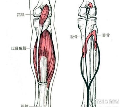 【图】小腿三头肌拉伤要多久才能恢复? 拉伤5大小常识