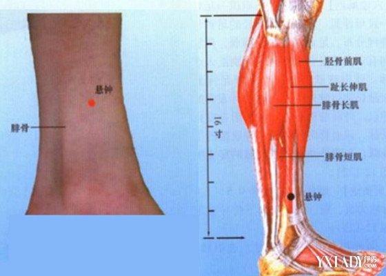 【图】右脚小腿穴位图详解 健康护理抢先知
