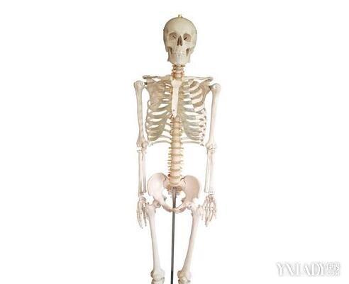 【图】带你走进手臂骨骼图 你对人体结构了解多少