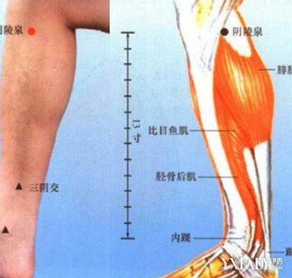 腿部六条经络图解大全 腿部经络不通会发生什么症状呢