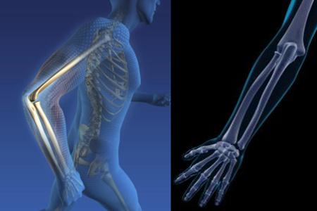 【图】有趣的人体手臂骨骼结构图 让你更加了解自己的身体