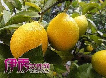柠檬片加绿茶泡水_绿茶柠檬_绿茶柠檬蜂蜜_绿茶柠檬片泡水的功