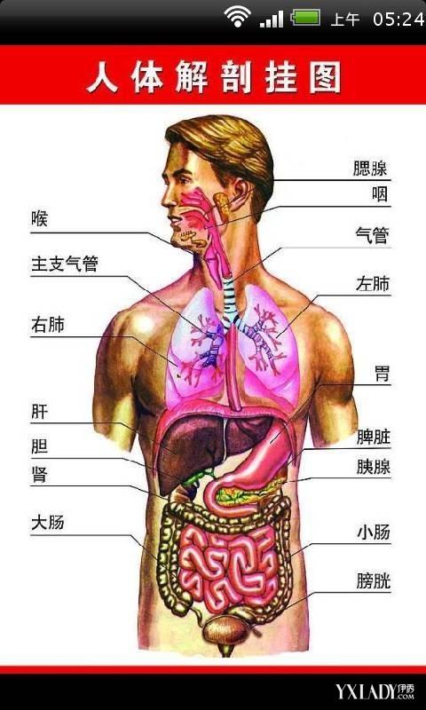 男性人体曰历囹�a_男人吃伟哥对男人身体伤害有多大.医.