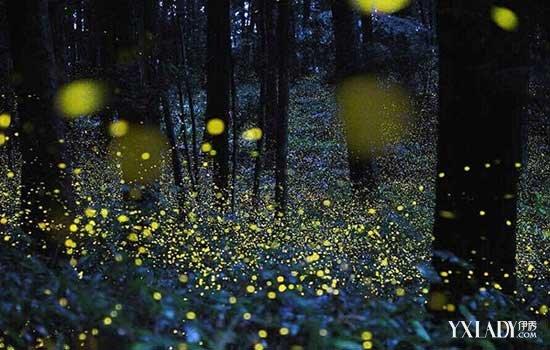 【图】数万萤火虫引观赏