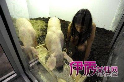 ,这次把自己和两只猪放在同一个玻璃屋内,与猪朝夕相处.这项行为
