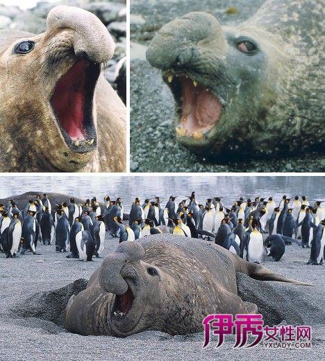 世界上长得奇丑无比的动物