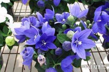 【图】什么花的花语是友谊长存 各种鲜花代表