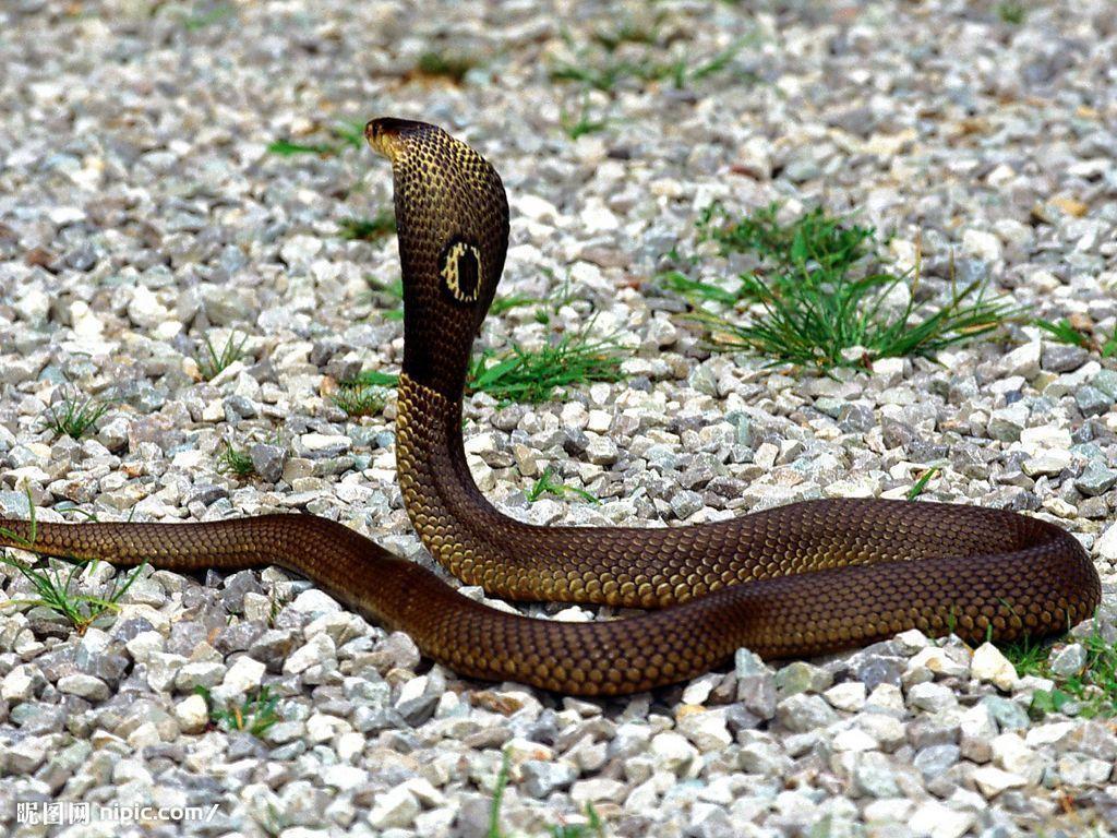兰州市动物园两栖馆的赵庭信先生养蛇多年,他代表动物园来接洽.