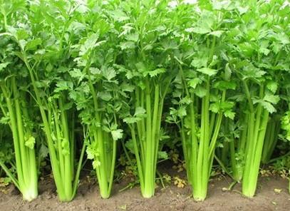 减肥蔬菜排行榜_减肥蔬菜水果汁_最有效的减去针瘦脸医院哪个福州图片