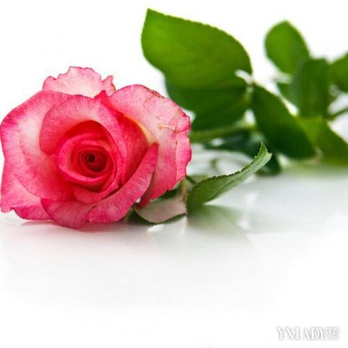 【图】玫瑰精油的作用 玫瑰精油的功效_精油香