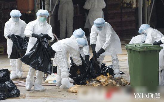 【图】江苏禽流感确诊首例未定人传人 禽流感