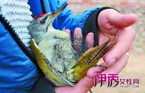 不幸被困的鸟儿幸运地遇到了它的人类朋友