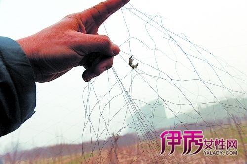 鸟网上留下的鸟毛